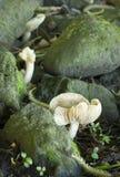Fungi Stock Images