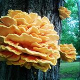 Fungi Royalty Free Stock Photography