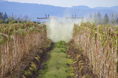Fungicide Drift. A heavy plume of toxic fungicide drifts through a berry field stock photo