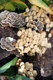 Fungii on stump Stock Image