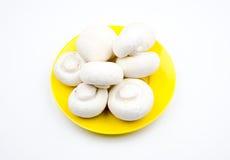 Fungo bianco Immagini Stock