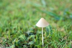 Fungo bianco su erba verde Fotografia Stock Libera da Diritti
