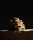 Fungo che cresce illuminato dall'interno Fotografie Stock