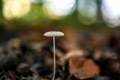 Fungo che cresce nella foresta Fotografia Stock Libera da Diritti