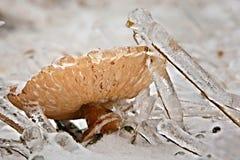 fungo congelato Immagine Stock Libera da Diritti