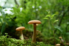 Fungo da floresta Foto de Stock