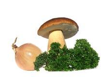 Fungo del Bolete con la cipolla ed il prezzemolo isolati sopra Immagini Stock