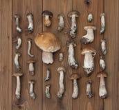 Fungo del boletus su fondo di legno Fotografie Stock Libere da Diritti