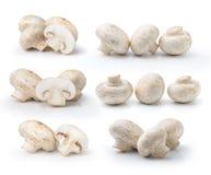 Fungo del fungo prataiolo isolato su priorità bassa bianca Fotografia Stock Libera da Diritti