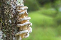 Fungo dell'albero Immagine Stock