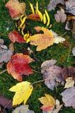 Fungo della banana e foglie di autunno Fotografie Stock Libere da Diritti