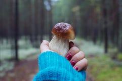 Fungo della foresta Immagine Stock