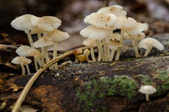 Fungo della foresta i Fotografia Stock Libera da Diritti