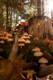 Fungo di autunno Fotografie Stock Libere da Diritti