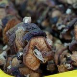Fungo di Dired al mercato dell'agricoltore Immagine Stock
