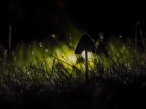 Fungo di notte fotografia stock