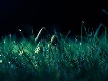 Fungo di notte fotografia stock libera da diritti