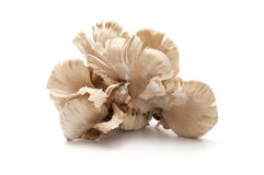 Fungo di ostrica Fotografie Stock