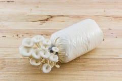 Fungo di ostrica che cresce sulla bottiglia Fotografie Stock