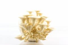 Fungo di ostrica che cresce sulla bottiglia Fotografia Stock