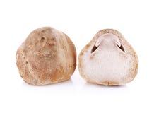 Fungo di paglia isolato su fondo bianco Fotografia Stock