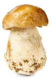 Fungo di Porcini su bianco Fotografia Stock