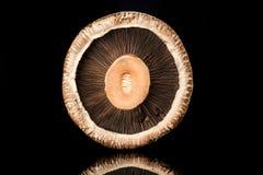 Fungo di Portobello Immagini Stock Libere da Diritti