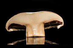 Fungo di Portobello Fotografie Stock Libere da Diritti