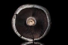 Fungo di Portobello Fotografie Stock