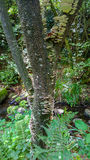 Fungo di sostegno dell'artista che cresce sul tronco di un albero Fotografia Stock