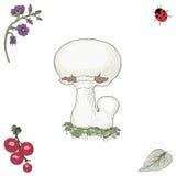 Fungo disegnato a mano del fungo prataiolo Fotografia Stock