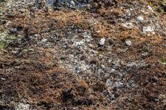 Fungo do solo no jardim imagens de stock royalty free