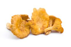 Fungo dorato del galletto Immagine Stock Libera da Diritti