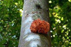 Fungo e muschio sul tronco di albero Immagini Stock Libere da Diritti