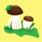 fungo ed erba verde Illustrazione di Stock