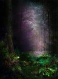 Fungo in foresta magica Fotografia Stock Libera da Diritti