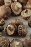 Fungo fresco Fotografie Stock