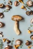Fungo fresco del porcino con i funghi misti sui precedenti blu, vista superiore Fotografia Stock