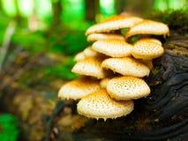 Fungo, fungo non commestibile Fotografia Stock Libera da Diritti