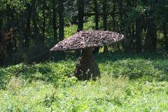 Fungo gigante Fotografia Stock Libera da Diritti