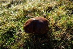 Fungo illuminato dai primi raggi del sole ad alba immagine stock