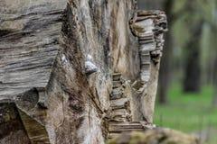 Fungo invece dell'albero tagliato immagine stock