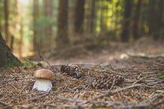Fungo in legno fotografie stock libere da diritti