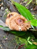 Fungo in legno Fotografia Stock Libera da Diritti