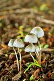 Fungo magico Fotografia Stock Libera da Diritti