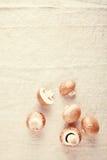 Fungo marrone comune sulla tovaglia del bianco sporco Immagini Stock Libere da Diritti