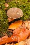 Fungo nel paesaggio di autunno Fotografia Stock Libera da Diritti