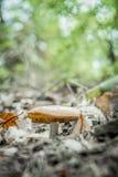 Fungo nella foresta Fotografia Stock Libera da Diritti