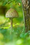 Fungo nella foresta. Immagine Stock
