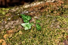 Fungo nella foresta X fotografie stock libere da diritti